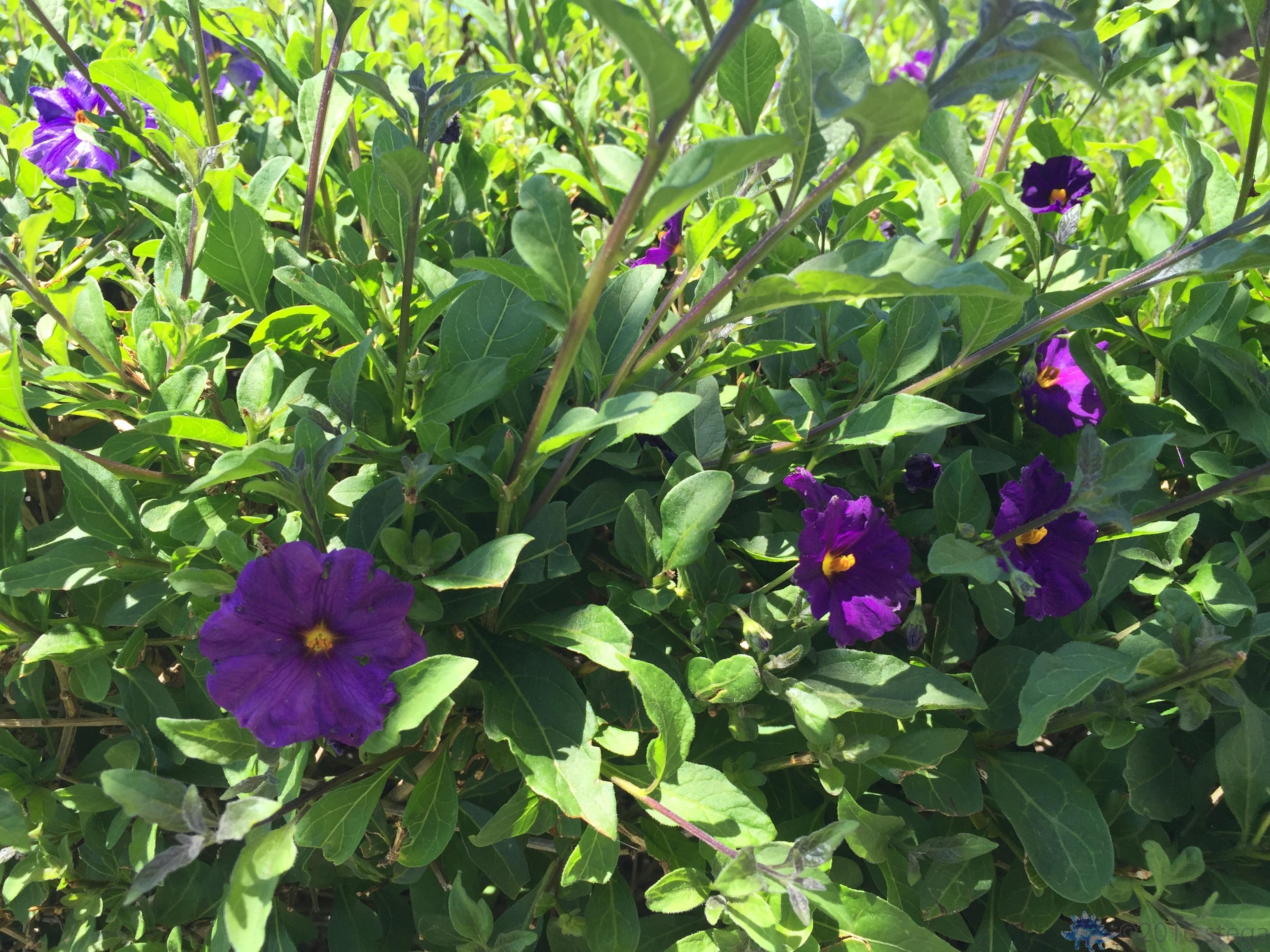 More pretty flowers purgatory more pretty flowers mightylinksfo